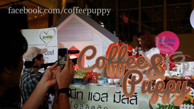 Coffee-Puppy-Give-A-Chance-11
