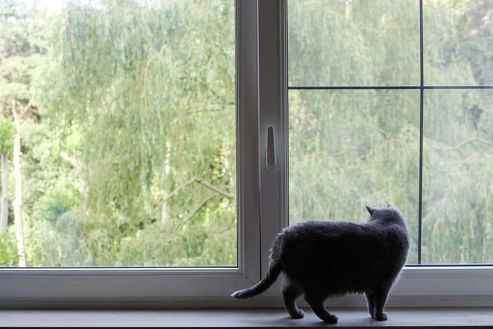 Kat kijkt naar buiten door het raam