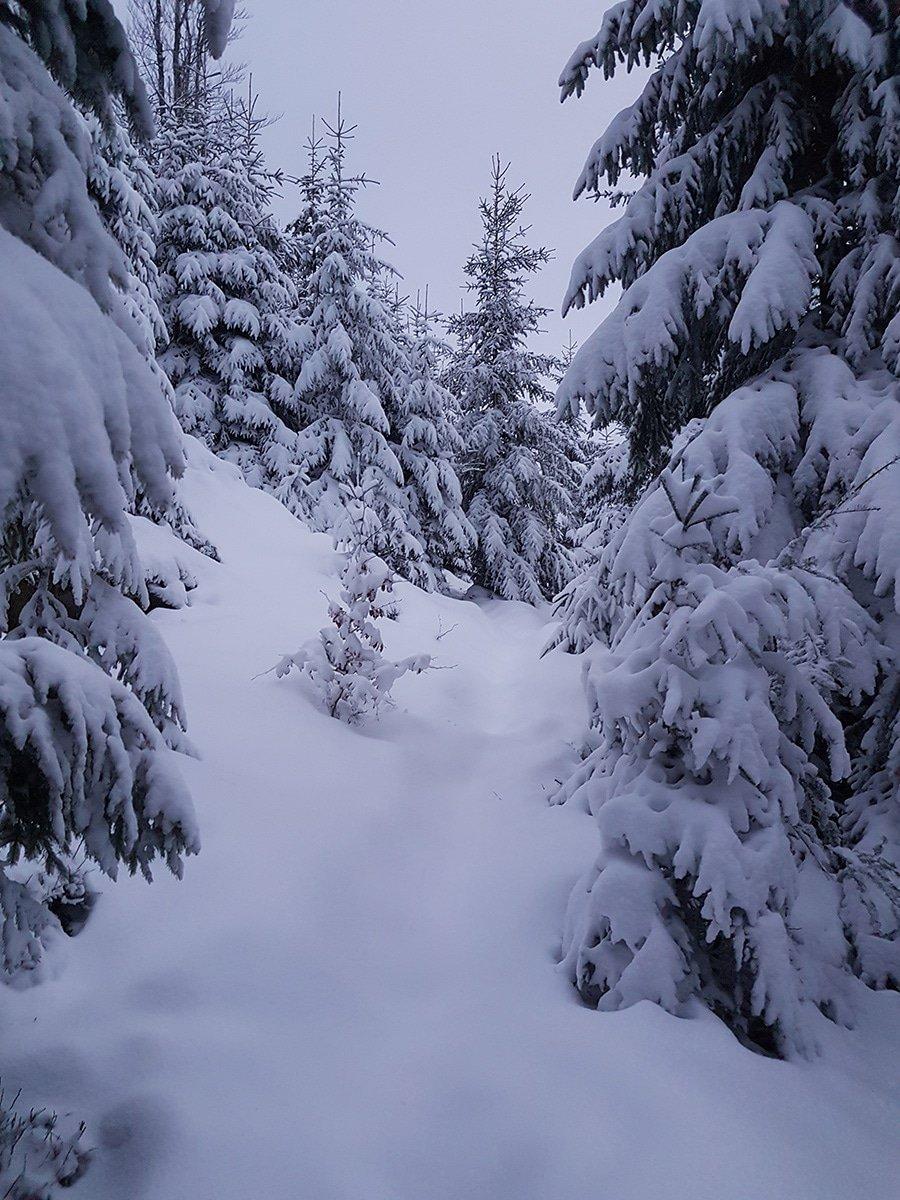 A travers la neige et les sapins